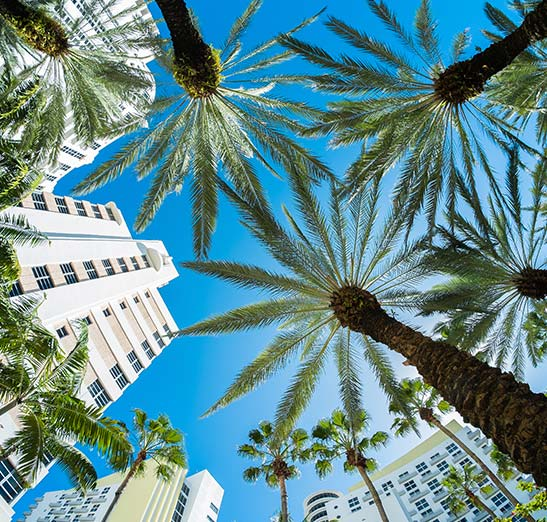 Beautiful sky view through palm trees with condo's in background.