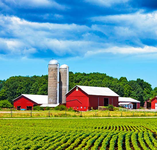 Green vegetable farm rows with red barn and silos shown in the background. Blue skies and green field.